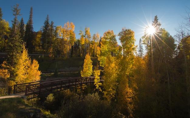 Herbstwald im tellurid mit brücke und sonnenstrahl und blauem himmel