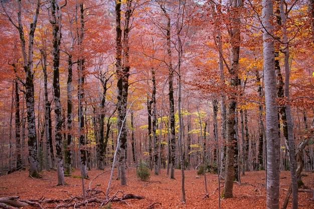 Herbstwald in pyrenäen valle de ordesa huesca spain