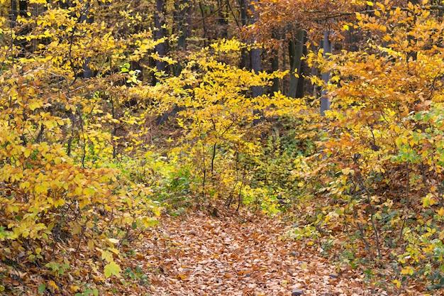 Herbstwald mit bäumen von verschiedenen warmen farben am bewölkten tag