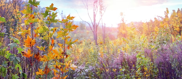 Herbstwald mit dickicht von bäumen und sträuchern bei sonnigem wetter