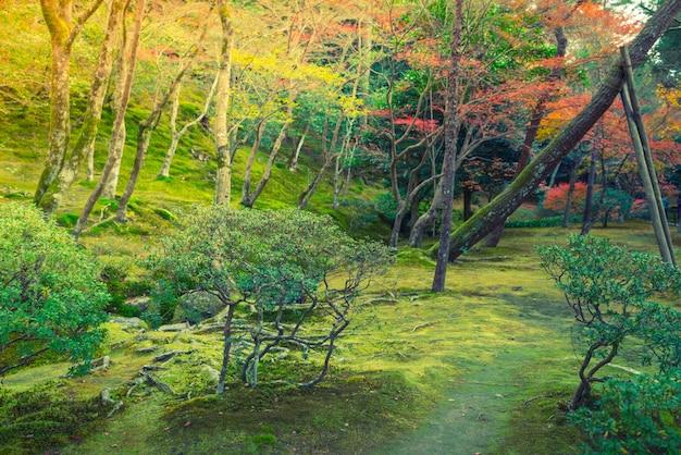 Herbstwald mit fluss (gefiltertes bild verarbeitet jahrgang effe