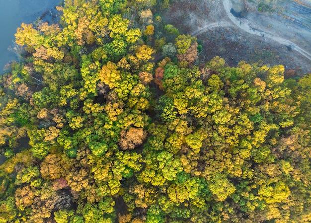 Herbstwald mit vogelperspektive der gelben und roten bäume.