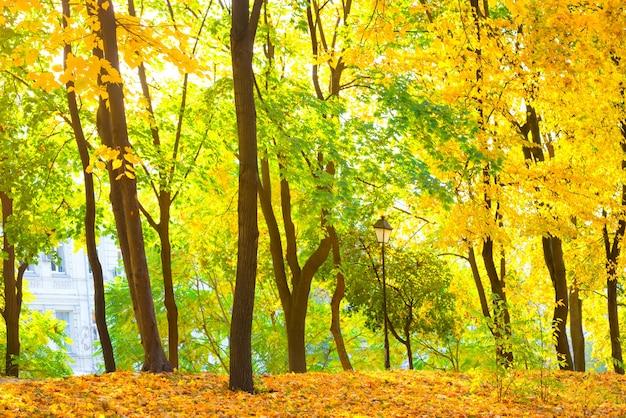 Herbstwald oder park mit leuchtend gelben bäumen