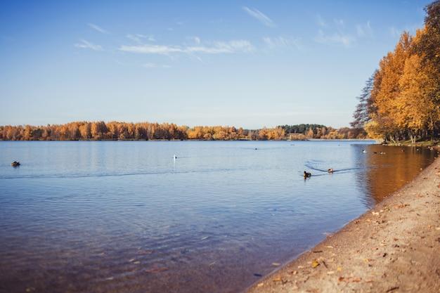 Herbstwald und see mit enten