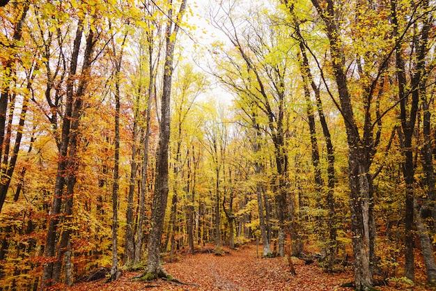 Herbstwald, weg im wald