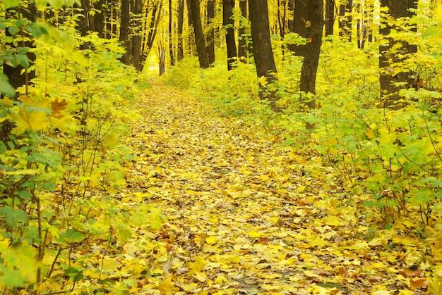 Herbstwaldhintergrund an einem sonnigen tag