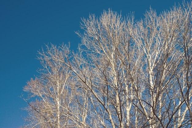 Herbstwaldhintergrund, kahlen ästen der silhouette und baumstamm gegen den blauen himmel im herbst. blattloser baum im herbst.