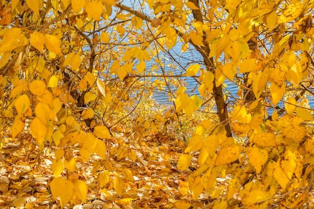 Herbstwaldlandschaft mit lichtbeleuchtung.