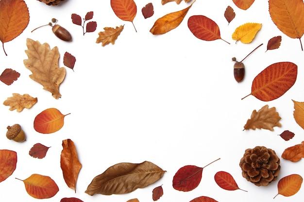 Herbstzusammensetzung der blätter auf einer draufsicht des weißen hintergrundes