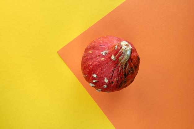 Herbstzusammensetzung. kürbis isoliert auf buntem gelbem und orangefarbenem hintergrund. vorlage mockup herbst, halloween, erntedankfest konzept. flache lage, draufsicht, kopienraumhintergrund