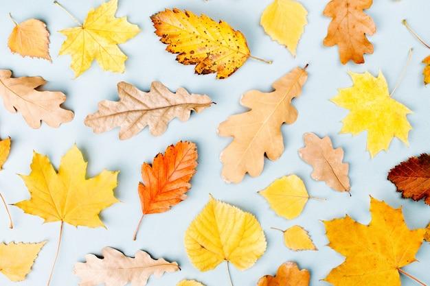 Herbstzusammensetzung. muster aus herbstlaub auf blauem hintergrund. flache lage, ansicht von oben, kopienraum