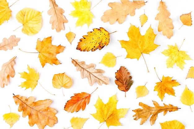 Herbstzusammensetzung muster aus herbstlaub auf weißem hintergrund flache ansicht von oben