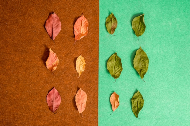 Herbstzusammensetzung von trockenen hellen blättern auf braunem und grünem hintergrund des filzes. schöne herbstkarte. draufsicht, flach zu legen.