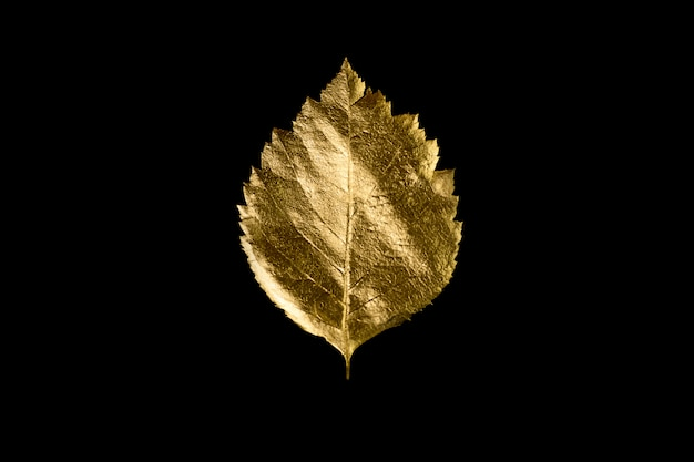 Herbstzusammensetzung von verschiedenen goldenen blättern und von buchstaben