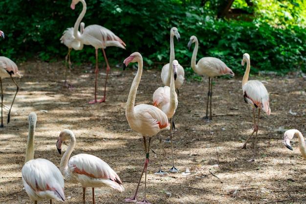 Herde schöner rosa flamingos in der nähe des flusses.