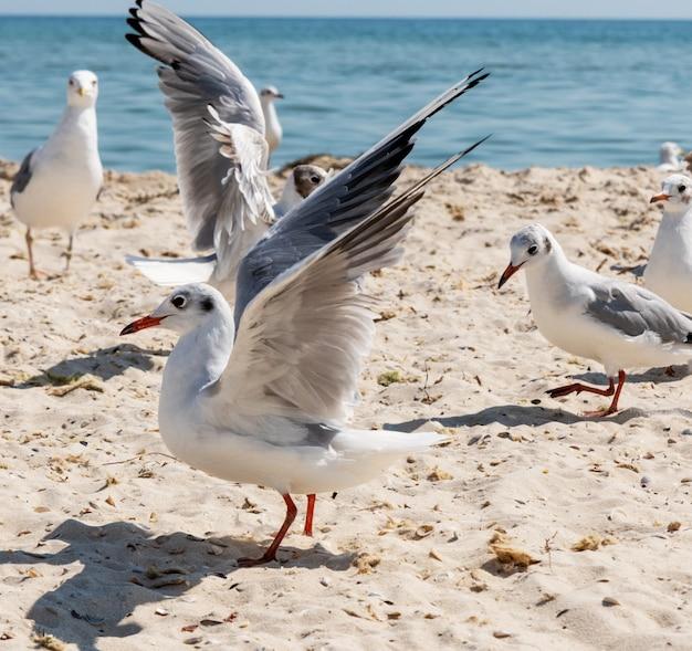 Herde von möwen am strand