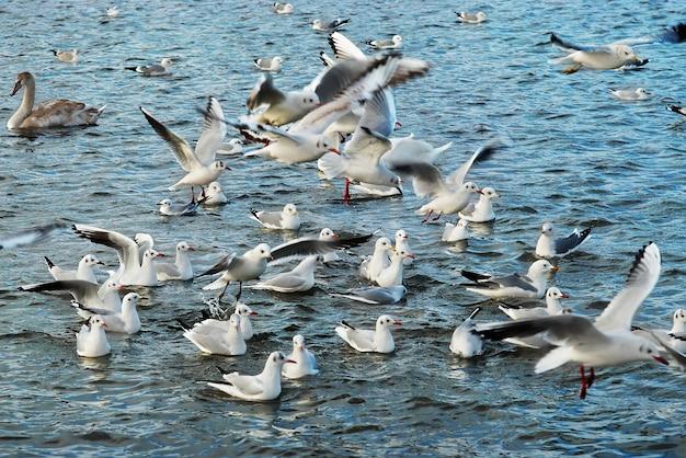 Herde von möwen, die über dem meer fliegen.