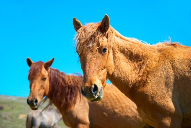 Herde von pferden auf dem feld mit blauem himmel