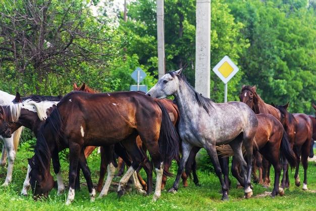 Herde von pferden, die im frühjahr oder sommer weiden lassen