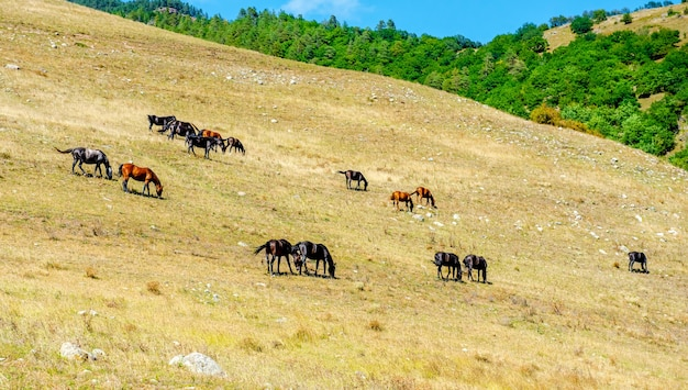Herde von pferden, die zusammen gras auf einem feld fressen pferde auf einer wiese