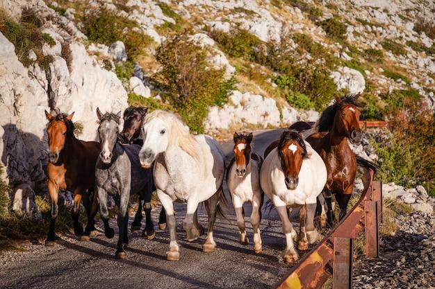 Herde von pferden galoppiert eine straße in den bergen hinunter