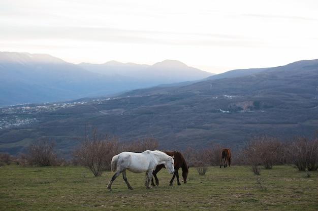 Herde von pferden grasen in den bergen bei sonnenuntergang