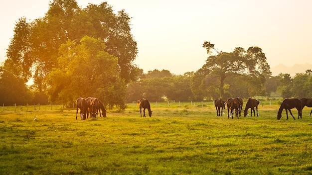 Herde von pferden in wiese weiden