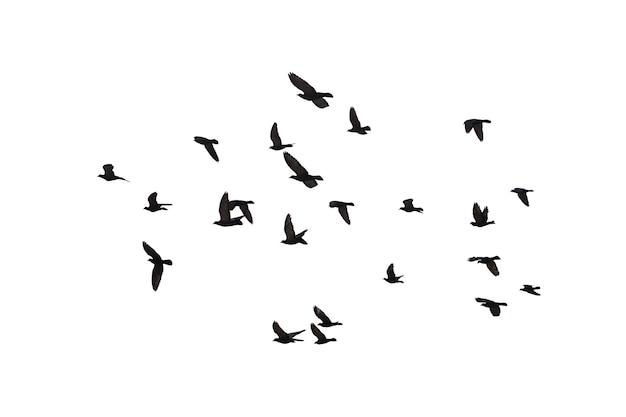 Herden fliegender tauben lokalisiert auf weißem hintergrund. beschneidungspfad.