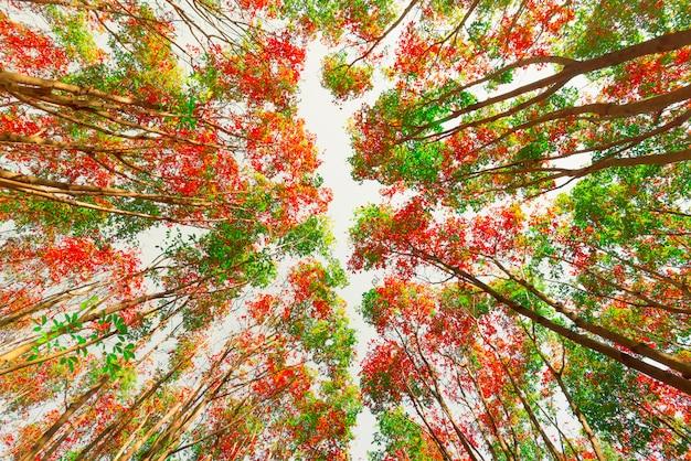 Herrliche herbstlandschaft eines szenischen waldes, bunte herbstbäume im wald