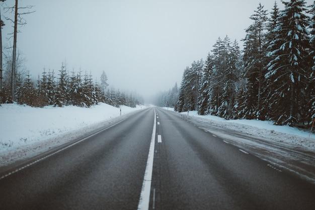 Herrlicher blick auf eine straße, umgeben von bäumen auf schneebedeckten feldern, die in schweden gefangen genommen wurden