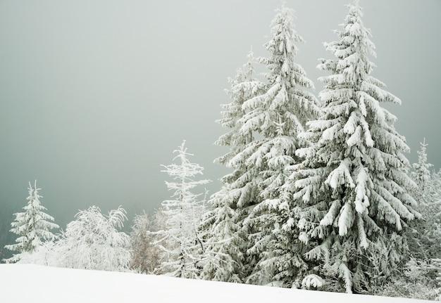 Herrlicher blick auf einen schneebedeckten hügel mit tannen und schnee auf einem hintergrund von grauem bewölktem himmel. wintersport- und trekkingkonzept. exemplar
