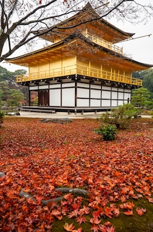 Herrlicher kinkakuji, japanischer goldener tempel, herbstrot lässt teppich im vordergrund, bewölkter tag.