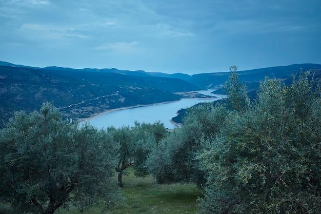 Herrliches panorama auf das sardische hinterland ein garten voller zehnjähriger olivenbäume