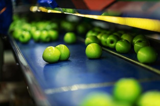 Herstellung und verpackung frisch sortierter grüner äpfel. eine nahaufnahme von reifen grünen äpfeln in der produktionslinie zum sortieren und auswählen von bio-obst und -gemüse. kleines familienunternehmen