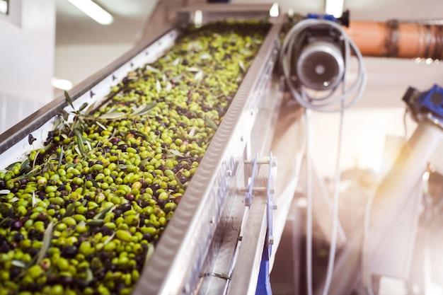 Herstellung von olivenöl