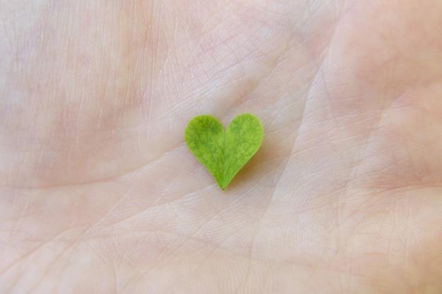 Herzförmiges kleeblattblatt in der menschlichen handnahaufnahme, makro. liebe zur natur, nähe zum naturkonzept