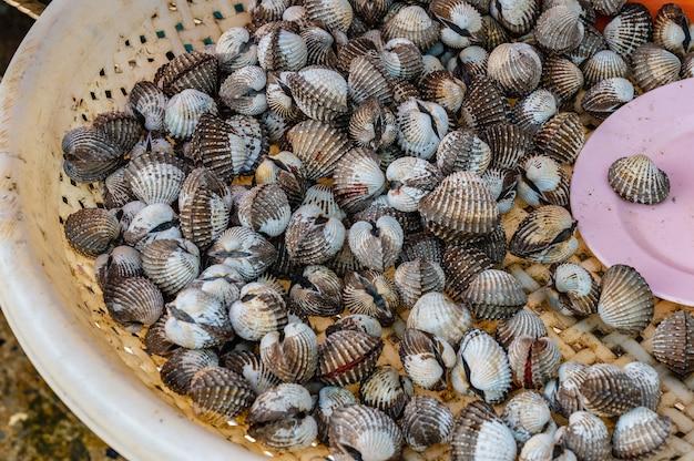 Herzmuschel im korb am frischmarkt von thailand. herzmuschel, auch herzmuschel genannt, eine der etwa 250 arten von marinen muscheln oder muscheln.