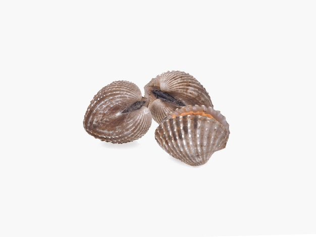 Herzmuscheln meeresfrüchte isoliert