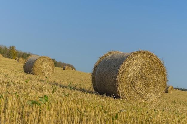 Heuballen auf einer farm mit sommerblauem himmel.