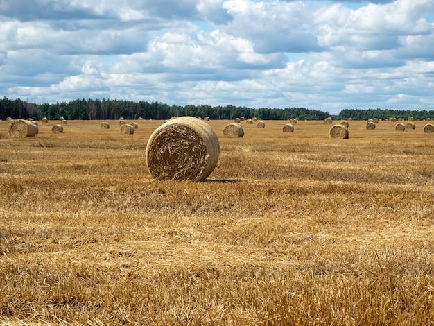Heuhaufen auf dem feld, nahaufnahme. leuchtend gelbe und goldene heuhaufen auf dem landwirtschaftlichen feld am sonnigen sommertag.