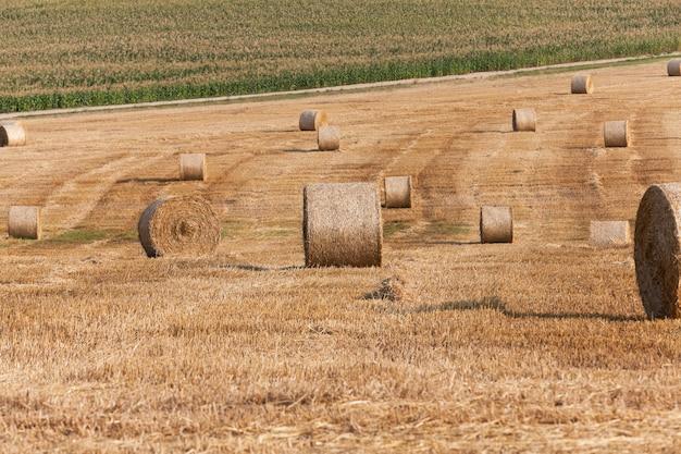 Heuhaufen auf einem strohfeld ein landwirtschaftliches feld, auf dem sich nach der weizenernte heuhaufenstroh befindet