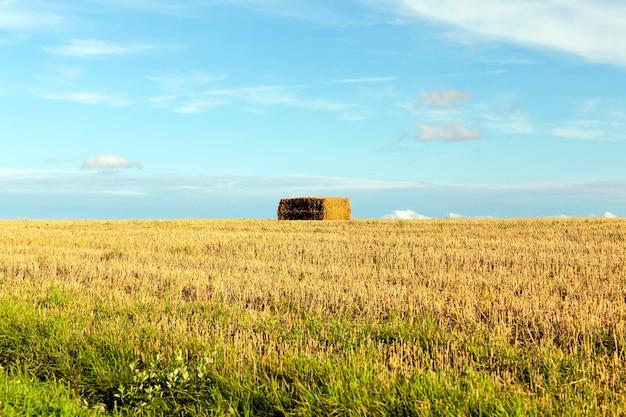 Heuhaufen stapelten stroh nach der ernte im landwirtschaftlichen bereich. foto in der herbstsaison