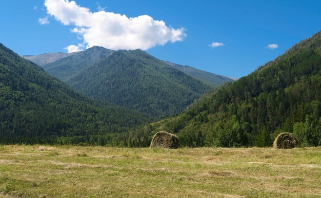 Heuschober auf dem landwirtschaftlichen feld in den bergen. altai, russland