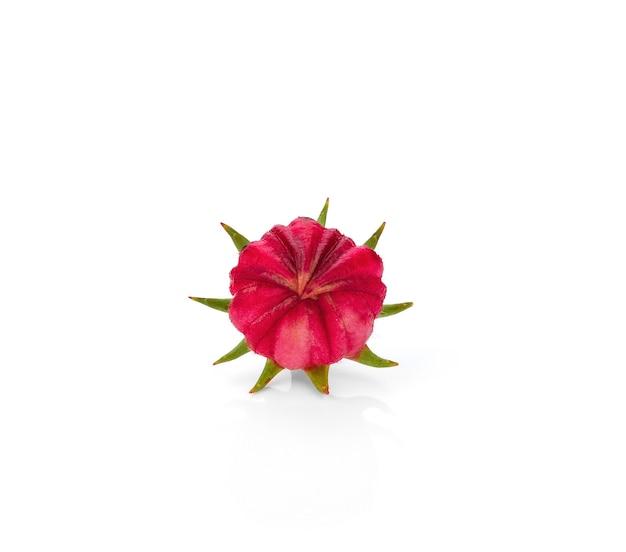 Hibiscus sabdariffa oder roselle früchte isoliert