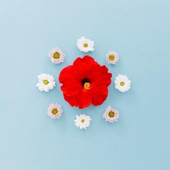 Hibiskus und gänseblümchen
