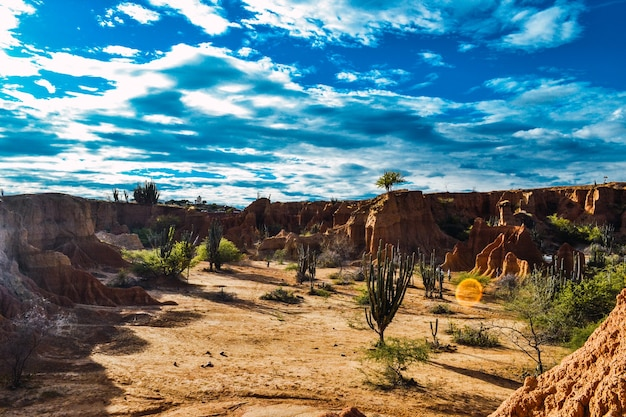 High angle shot der exotischen wildpflanzen, die zwischen den felsen in der tatacoa-wüste, kolumbien wachsen
