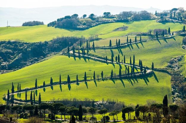 High angle shot einer straße, umgeben von bäumen und den schönen grasbedeckten feldern