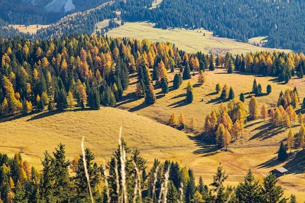 High angle shot von grasbewachsenen hügeln bedeckt in bäumen in dolomit italien