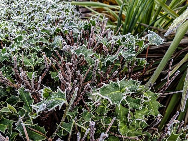 High angle shot von grünen pflanzen