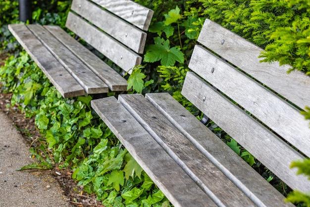 High angle shot von zwei holzbänken, umgeben von schönen grünen pflanzen auf einem park